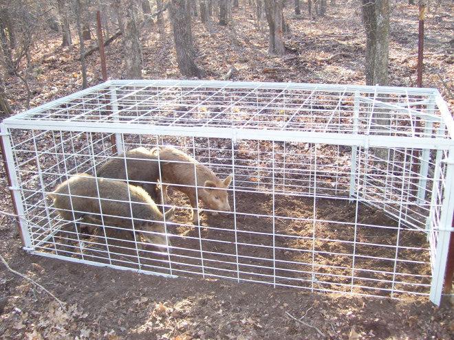 Wild Hog Traps Swinging Doors Nude Gallery